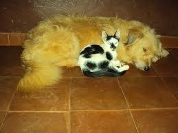 castracion de mascotas